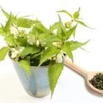 Fresh stinging nettles with white flowers in blue cup and heap of dried nettle on wooden spoon. Isolated on white background